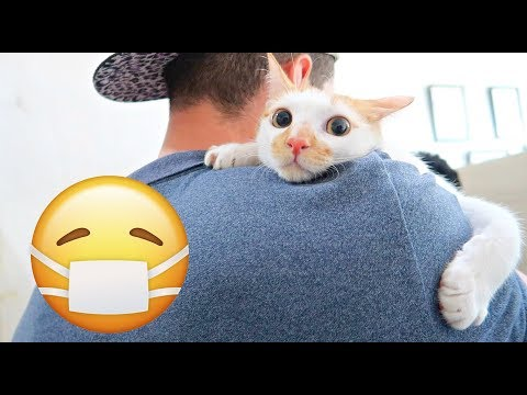 What DO CATS THINK of VET VISITS? Cat's Perspective 👀💉