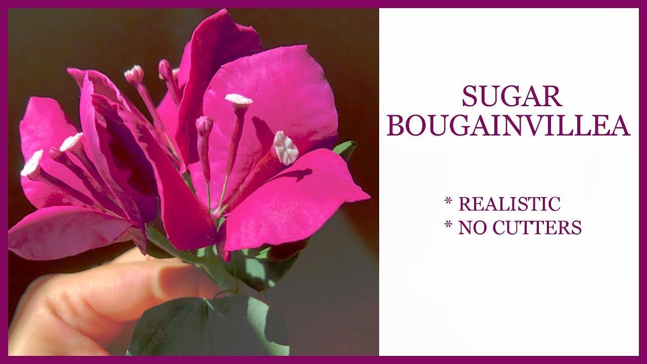 Sugar Bougainvillea Tutorial No Cutters Realistic Gumpaste Sugar