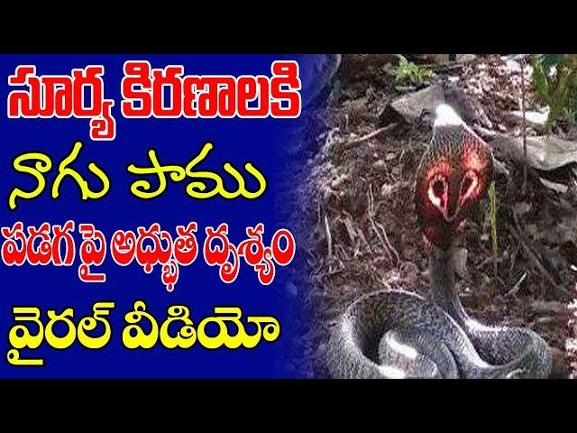 నాగు పాము పడగపై కృష్ణుడి పాదాల అద్భుతం మీరు చుడండి ||latest telugu whatsapp videos || chitresh tv