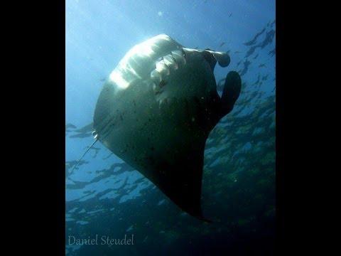 Diving Bali - Tauchen Bali - Unterwasser Aufnahmen von Bali - Indonesia underwater dreams