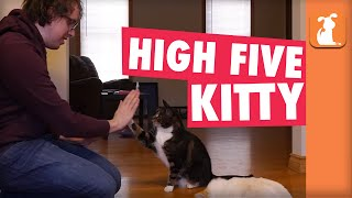 Smart Kitty Gives High Fives