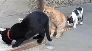 Коты под валерьянкой