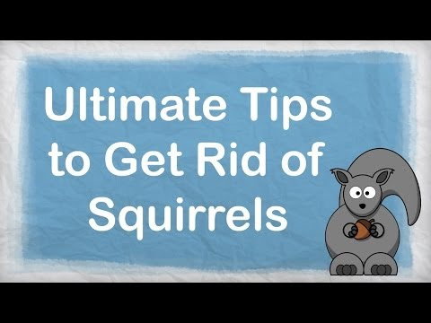 How to get rid of squirrels | ULTIMATE Repellent for Getting Rid of Squirrels | How to Repel Pests