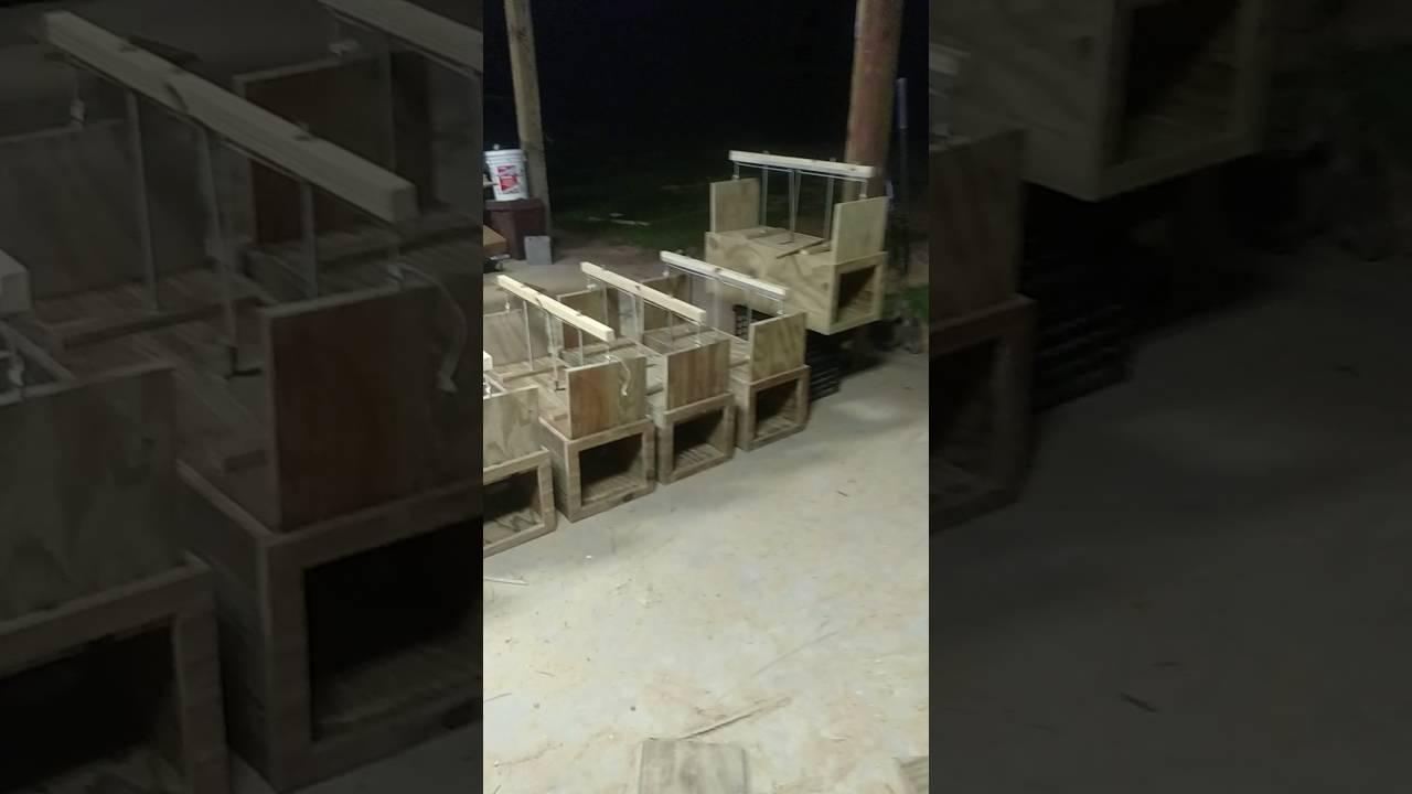 Armadillo Trap Building Final Finish