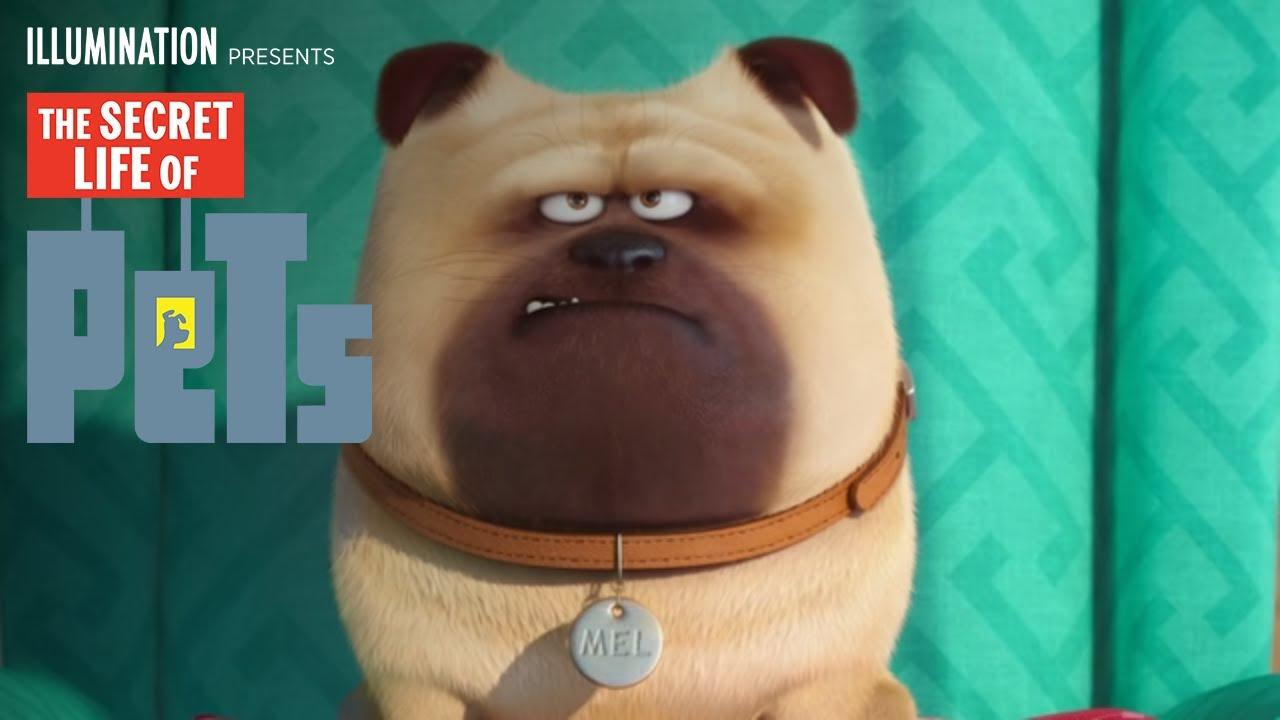 The Secret Life Of Pets Meet Mel Hd Illumination Youtube