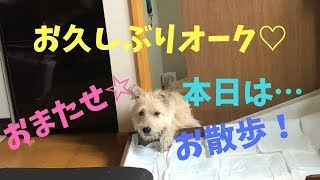 元野犬のオーク☆(*´ω`*)お久しぶりです!本日は、ちょっと前の散歩の様子です☆