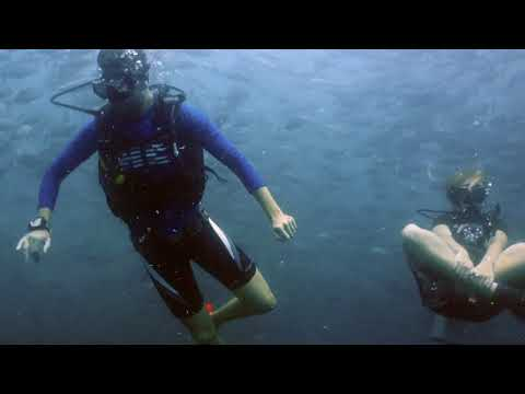 OPEN WATER COURSE with Wes and Kat from Canada - KOH TAO - SAIL ROCK