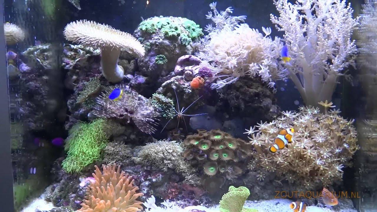 aquarium zoutwatervissen