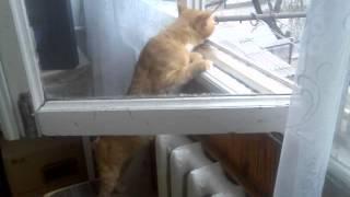 Кот и свежий воздух.3gp