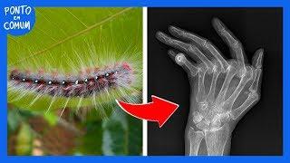 O que acontece se você TOCAR nessa lagarta?