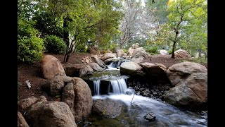 Take a Video Tour of the Japanese Friendship Garden in Downtown Phoenix