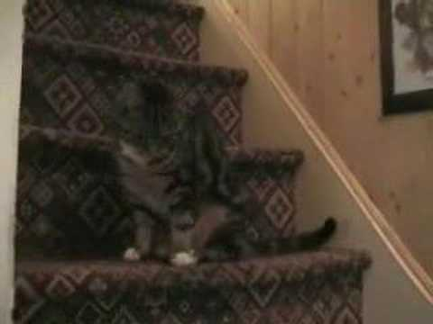 Stripey Tail chasing