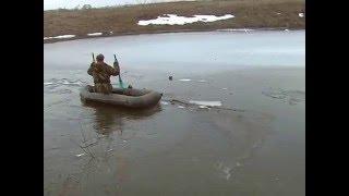 белолобый гусь подо льдом bausond goose under ice