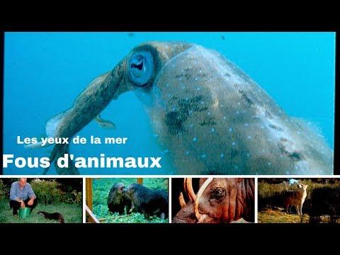Les yeux de la mer - Panama - calamars - Fous d'animaux
