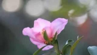 大沢桃子 - 風の丘