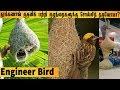 தூக்கணாங் குருவி கூடு பற்றி நாம் தெரிந்துகொள்ள வேண்டிய 10 அதிசயங்கள் Baya weaver Bird Thuknagkuruvi
