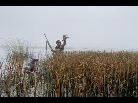 Duck Loses head! Californina Duck hunting with a German Shorthaired Pointer out of a Excel F86