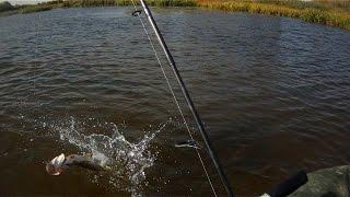 Megabass i-Slide 135B долавливает щуку после спиннербейта.Pike Fishing.