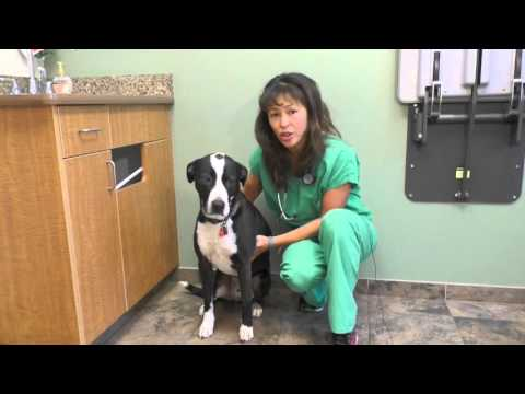Signs you have to bring your dog to a veterinarian immediately!