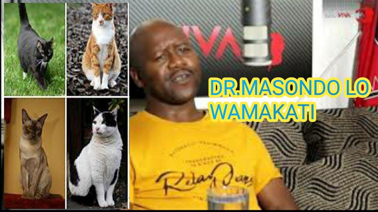 Download DR MASONDO a.k.a Cwepheshe indoda esho ingananazi ngekati , kodwala ngiyiphekile impela ngemibuzo!!!