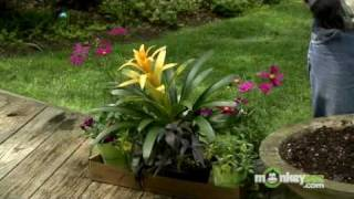 May Gardening Tips - Annuals
