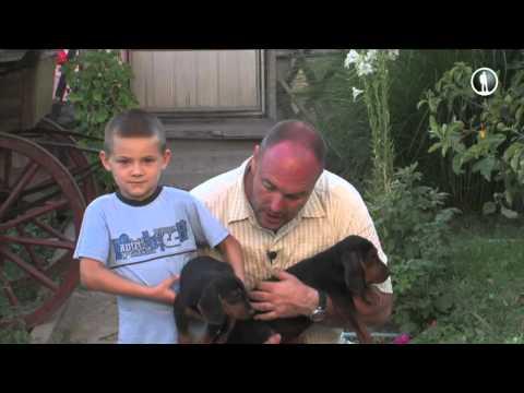 Планета собак. Сербская гончая