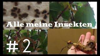 Alle meine Insekten #2 | Insekten TV