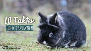 10 FAKTEN über Kaninchen, die du vielleicht noch nicht weißt | Kaninchenstar
