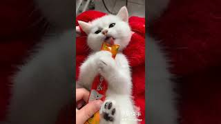 Funny baby  Cat Videos, naughty baby cats 面白い猫 #5