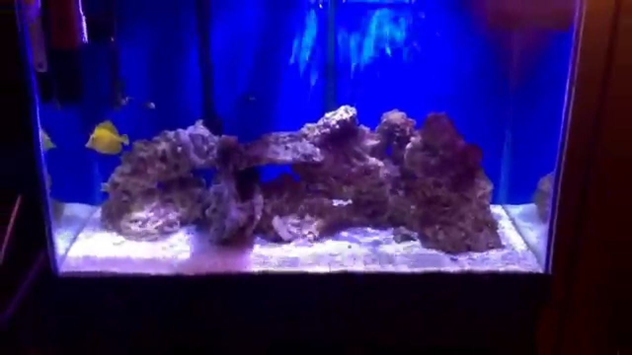 Fish tank by jabs 65 gallon salt water tank youtube for 65 gallon fish tank