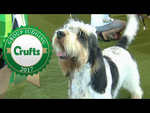 Hound Group Winner's Interview | Crufts 2017
