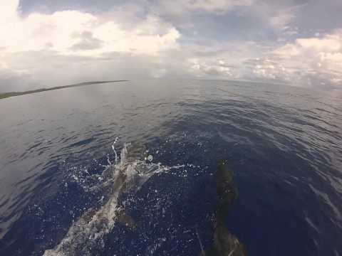 Yap, Federated States of Micronesia Dolphin Chase