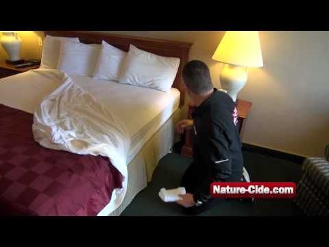 How to Kill and Prevent Getting Bed Bugs from Hotels While Traveling   Nature-Cide