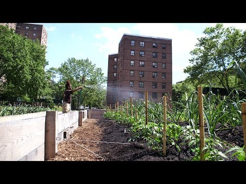 A Green Future is Possible for NYC Thanks to One Innovative Organization