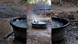 Duck bath #shorts