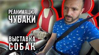 Реанимация Чубаки / Выставка собак Ренессанс / 09.06.19