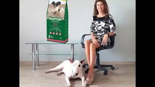 Обзор сухого корма Nutrican (Нутрикан) для собак