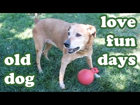 senior-old-dog-playing-ball-in-lawn---dogs-outdoor-games---cute-animals-videos---dogscircle-jazevox