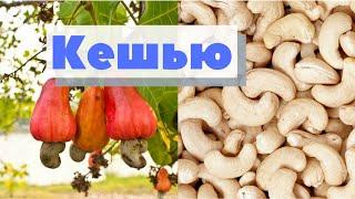 Как это сделано | Кешью | How is made cashew nut