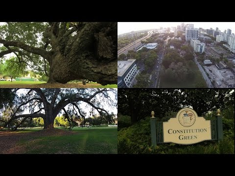 Fly through the 175-year-old tree at Constitution Green