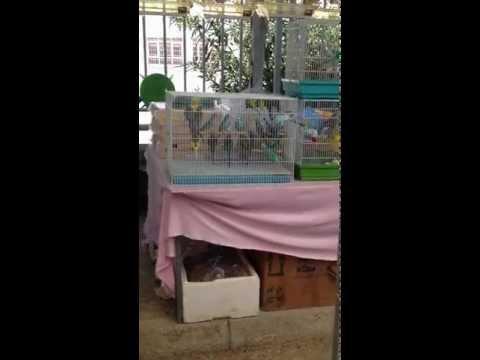 Πώληση ζώων σε παζάρι Αλμυρού-Μαγνησία