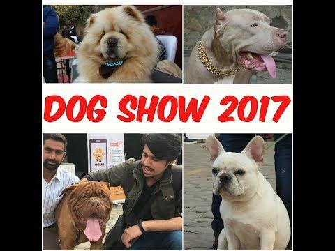 DogShow Delhi 2017