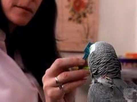 df034e3da9f Miks loomad üritavad rääkida nagu inimesed? - Forte