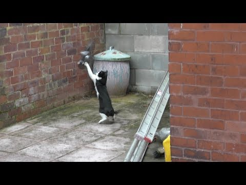 Bird Narrowly Escapes Certain Death From Stalking Cat - 4K - Original