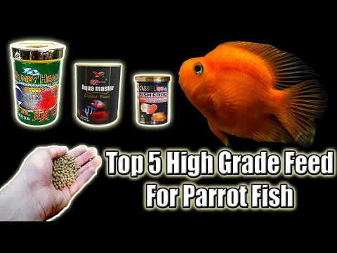 Top 5 High Grade Fish Feed For Parrot Fish