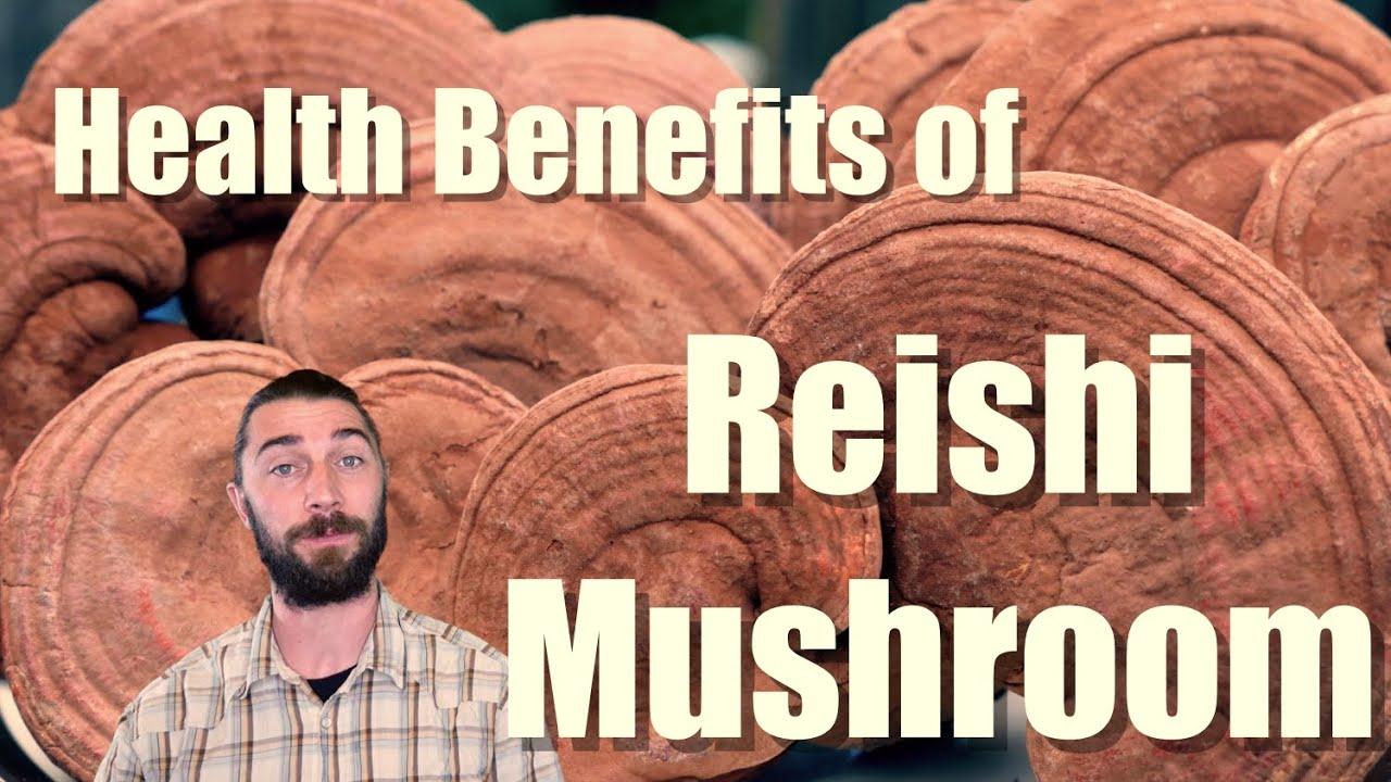REISHI MUSHROOM IN A NUTSHELL