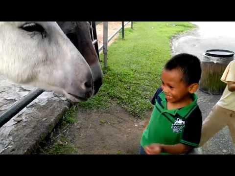Animal Farm Bukit tinggi