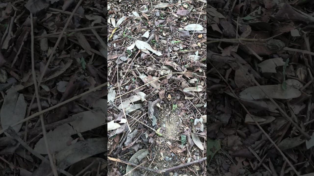 สวนผู้พัน สุพรรณบุรี ตอน ต้นไม้1ต้นได้ประโยชน์ 3 อย่าง