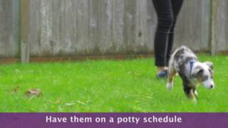 Dog And Puppy Potty Training  : The Basics