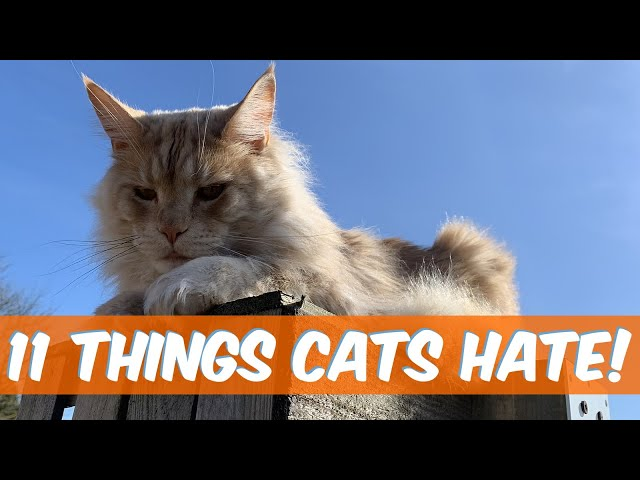 Things All Cats Hate: what do cats hate most?